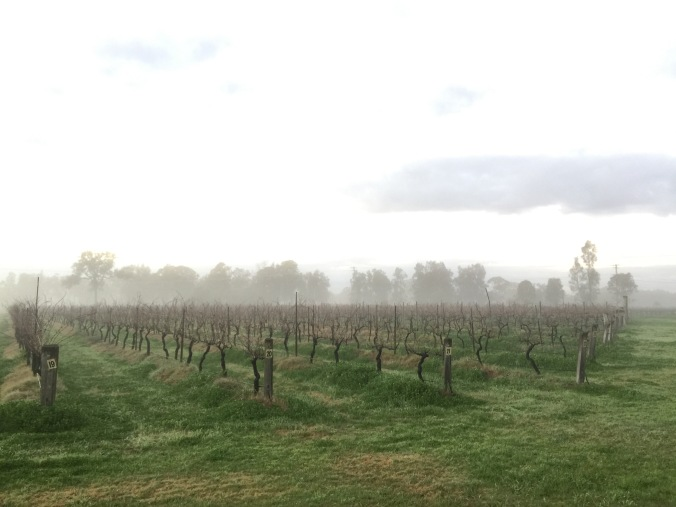 Emma's Cottage Vineyard at dawn