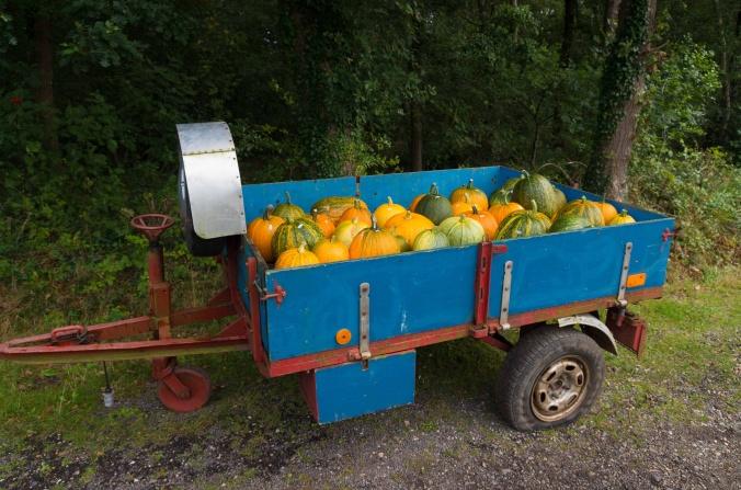 gourds in a trailer